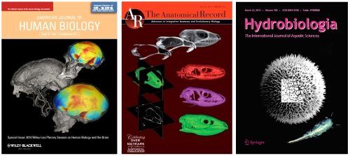 Covers 2010-2013 (Bruner)